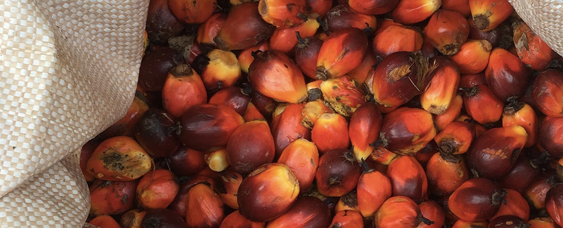 UBI - LUB - palm oil